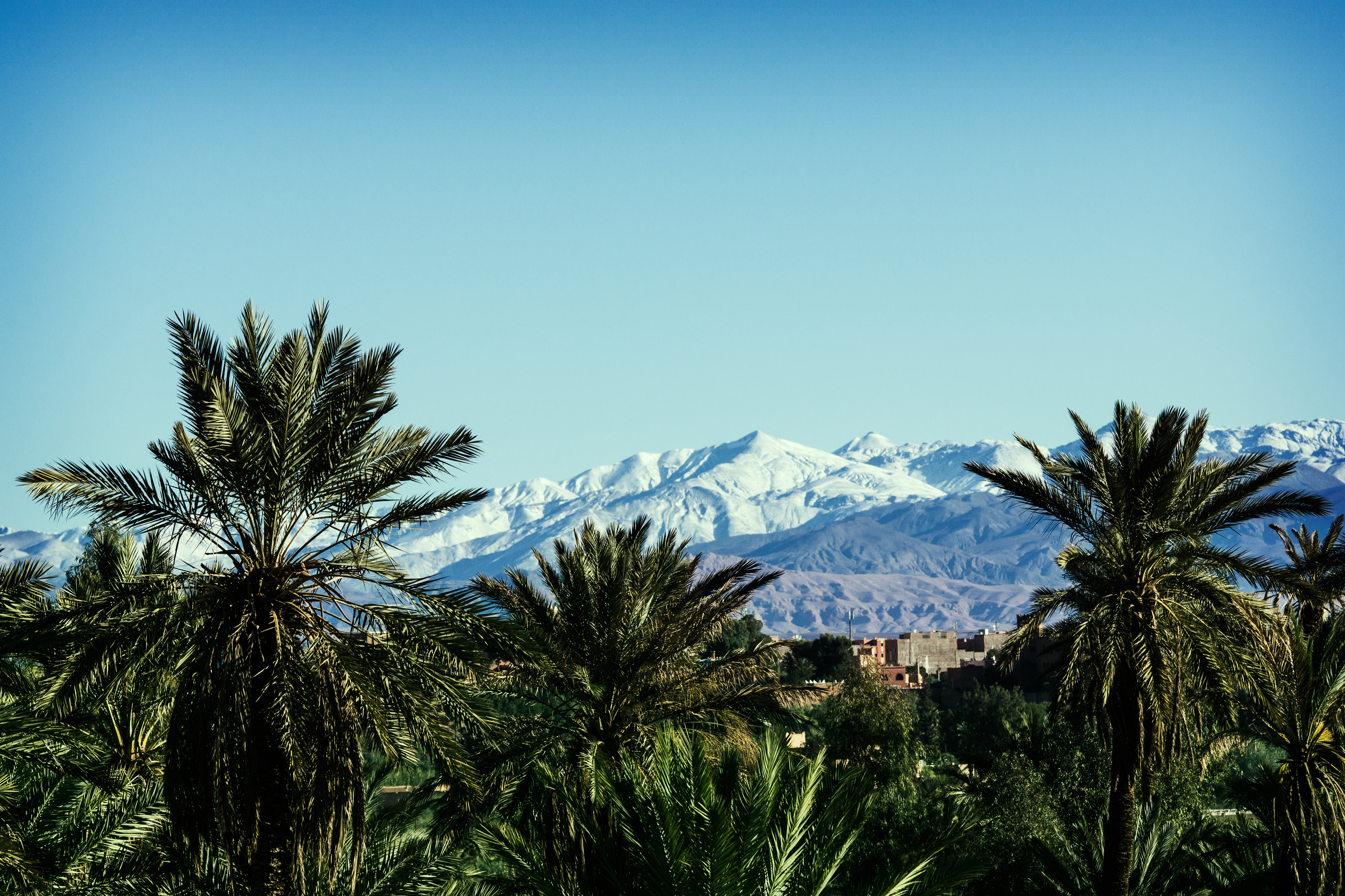 Palmtrees and mountains.jpg