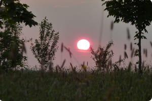Westall Park Sunset