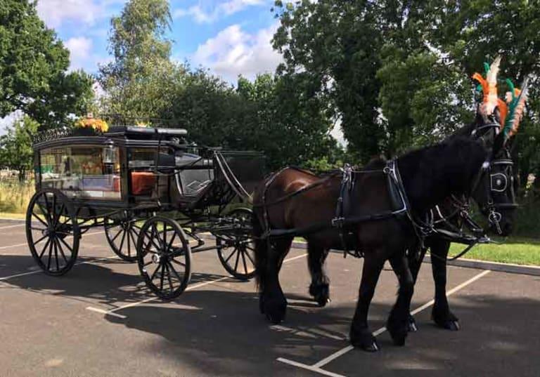 Black horse hearse