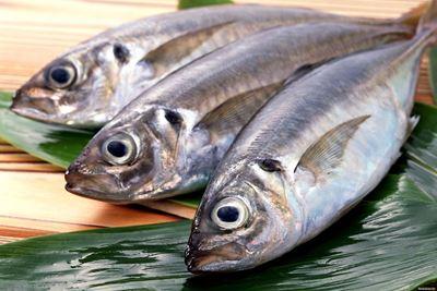 4 Ikan untuk Penderita Asam Urat Tinggi