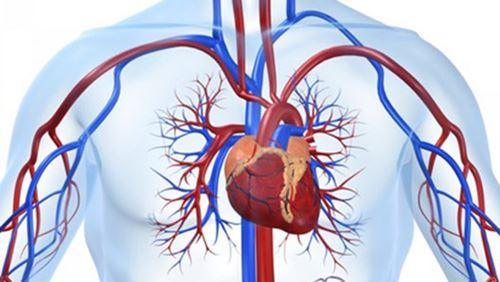 Jantung – Definisi dan Penyakit Terkait