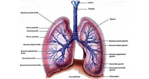 Paru-paru – Definisi dan Penyakit Terkait