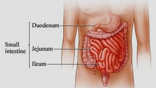 Usus – Definisi dan Penyakit Terkait