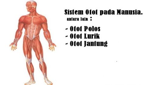 Otot – Definisi dan Penyakit Terkait