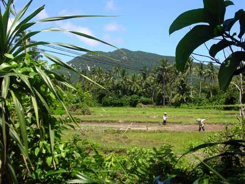 Tonggu and Countryside