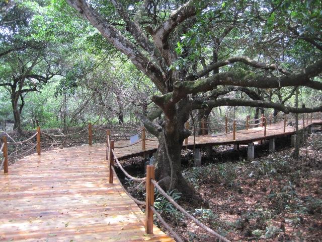 Wenchang Cycle Path Mangrove