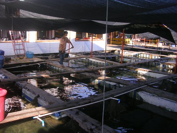 floating fish farms