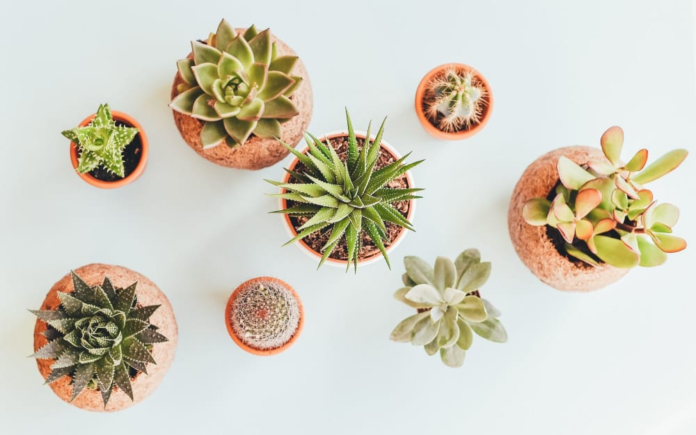 Make a statement with your plants!
