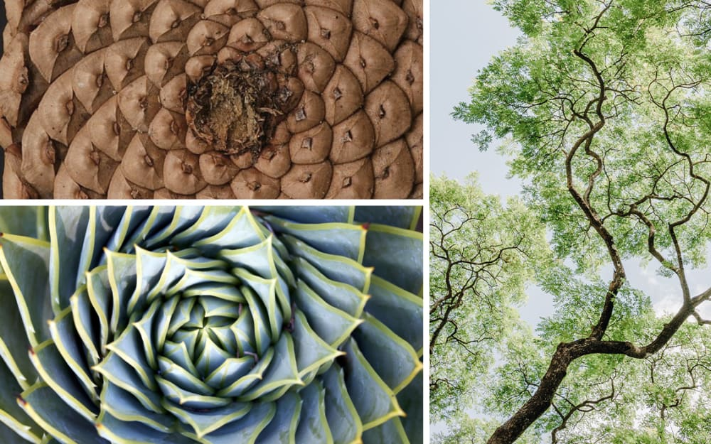 Biophilic moodboards: fractals in nature