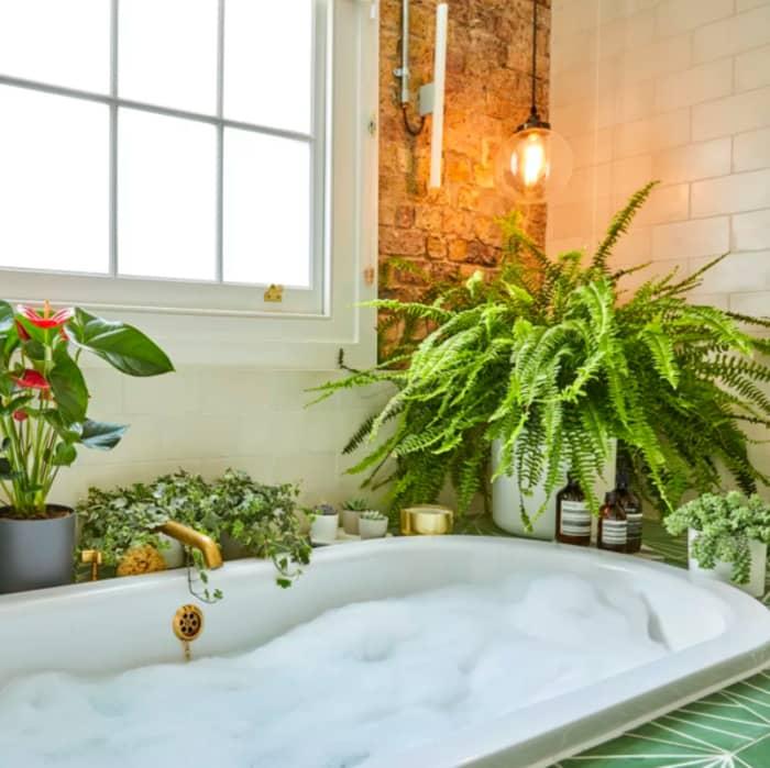 Boston sword fern on the side of a bathtub.