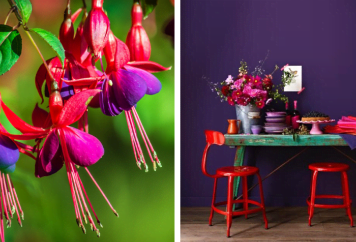Uses of violet and red in nature and in interiors. Nature: colourful flowers. Interior: teal console table against a purple wall and red chairs. The flowers and the dishes stacked on the table add different shades of red and purple.