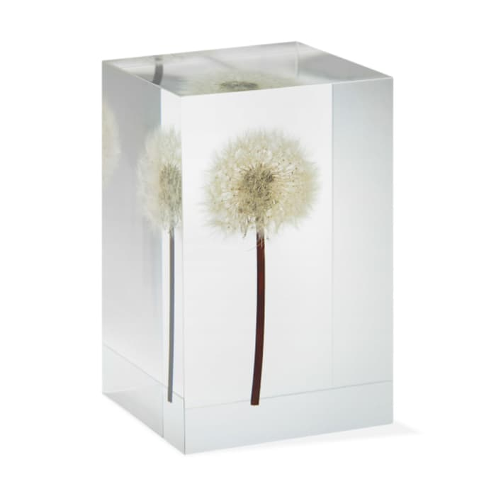 Acrylic cube enclosing a real dandelion, by MoMa Exclusive.