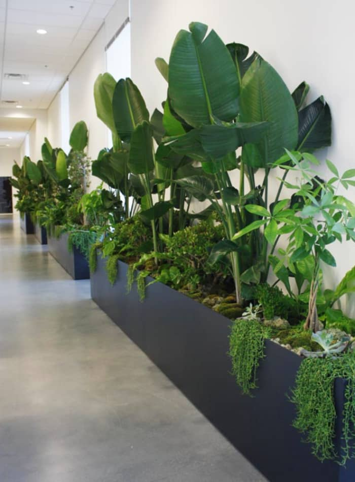 Planter in a corridor with several different plants, great example of biophilic design.