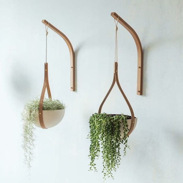 Two draping plants hanging from a wall.