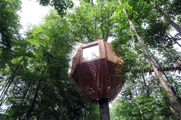 View of the outdoors showing the treehouse immersed in the foliage.