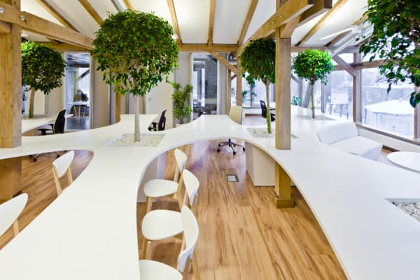 Biophilic office with organic shaped desks and trees in between the tables.