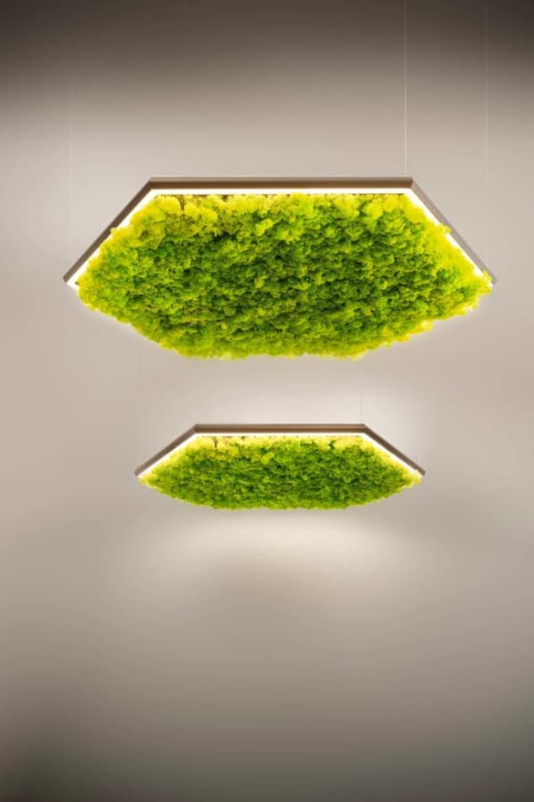 Exagon pendant light filled with sound-absorbing lichens.