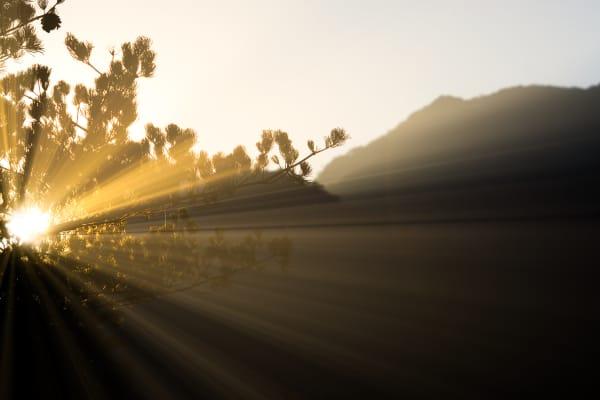 Sunlight filtering through branches.