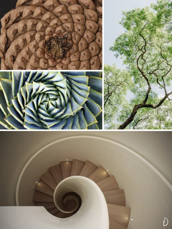 Moodboard showing a spiral staircase and some natural fractals: a pinecone, a succulent and the branches of a tree.