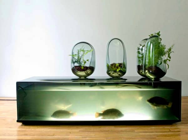 Photo of the aquaponic home system Local river.