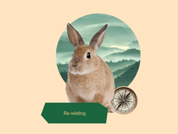 """""""Re-wilding"""" graphic representing a rabbit, a compass and a natural landscape."""
