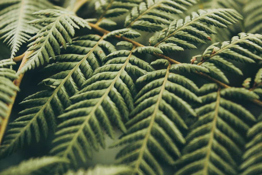 """Close up of a pine leaf.<span class=""""sr-only""""> (opened in a new window/tab)</span>"""