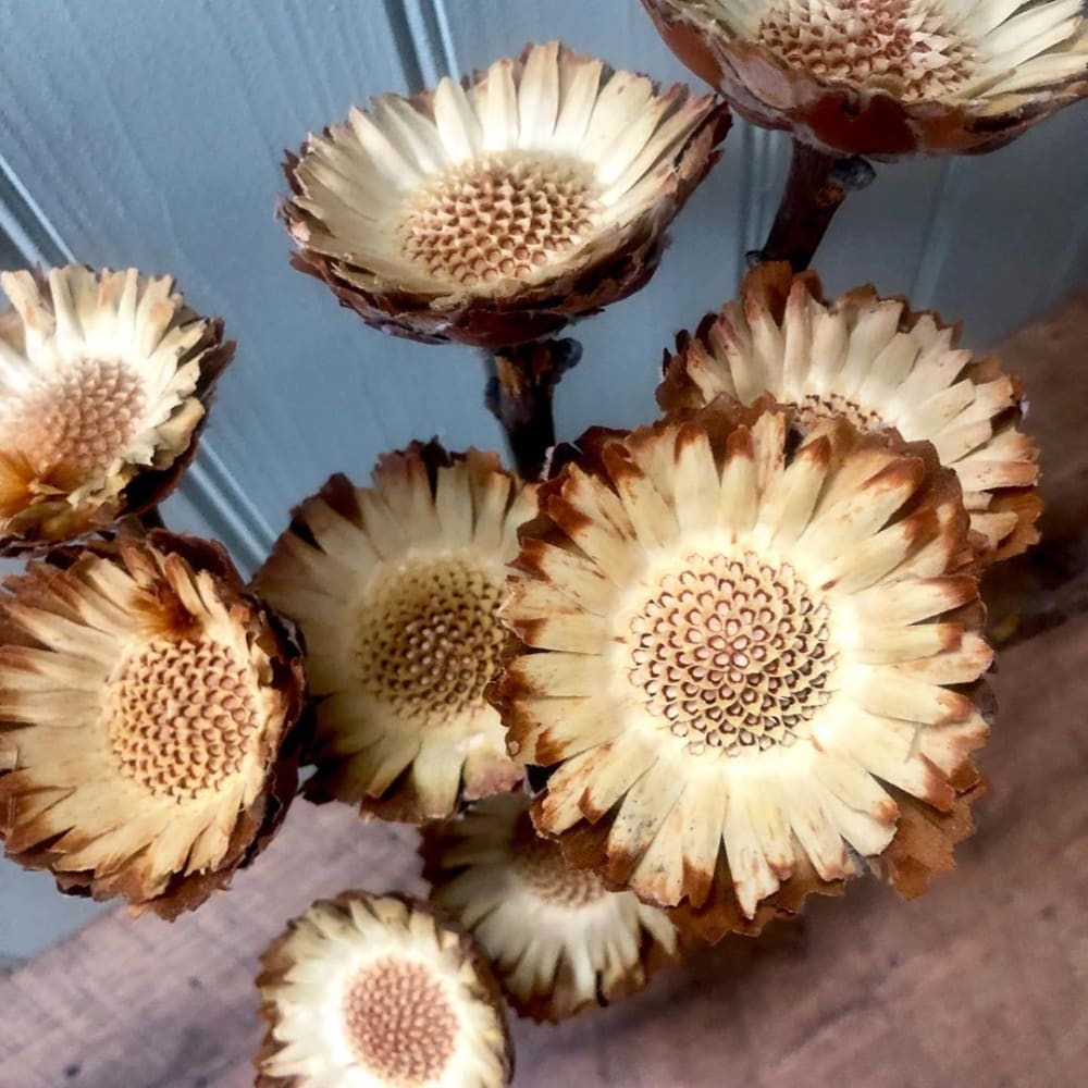 """Close-up view of dried flowers with brown colours.<span class=""""sr-only""""> (opened in a new window/tab)</span>"""