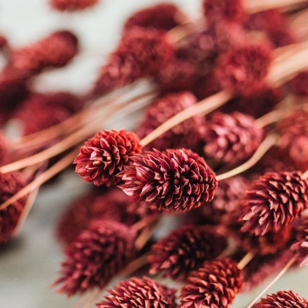 """Close-up view of a red dried grass arrangement.<span class=""""sr-only""""> (opened in a new window/tab)</span>"""