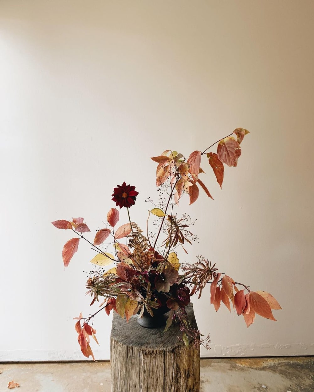"""An arrangement of reddish leaves and one single red flower.<span class=""""sr-only""""> (opened in a new window/tab)</span>"""