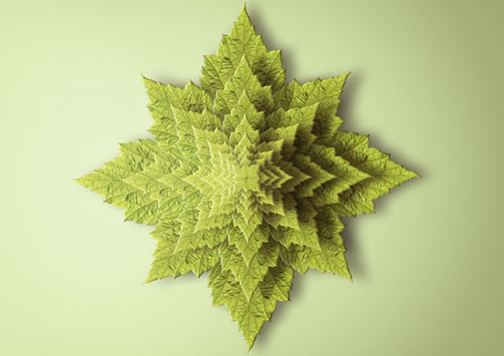 """Fractal print reproducing a plant seen from above.<span class=""""sr-only""""> (opened in a new window/tab)</span>"""