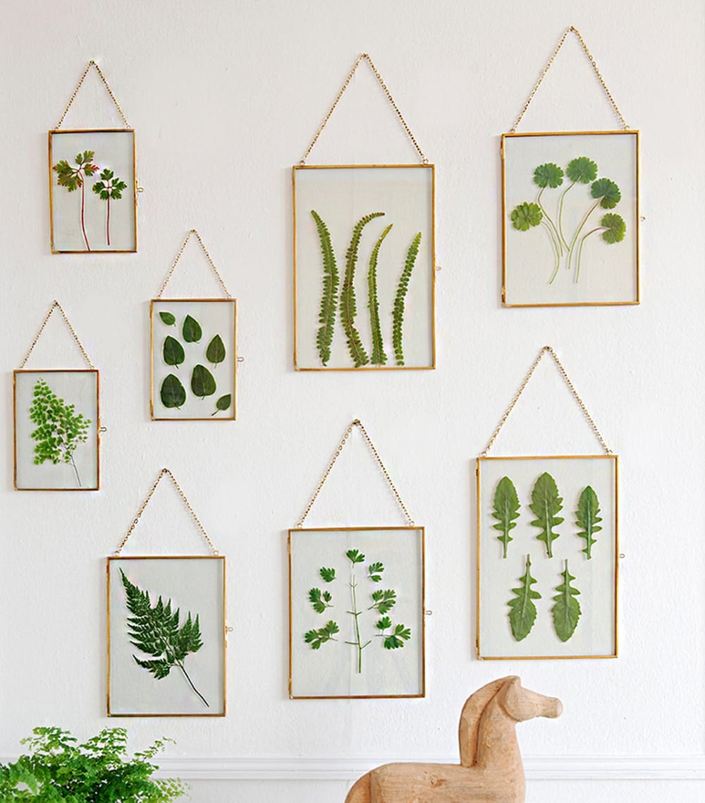 """Pressed leaves displayed on glass frames.<span class=""""sr-only""""> (opened in a new window/tab)</span>"""