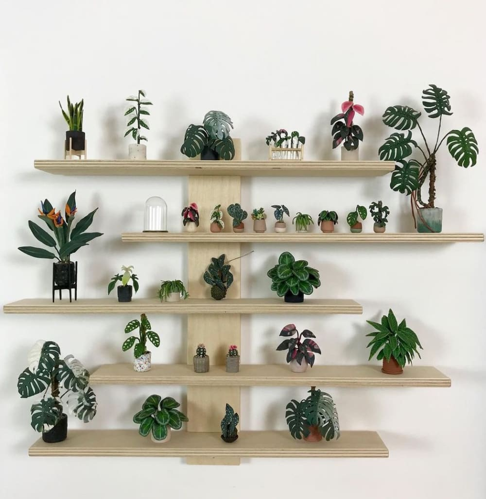 """Plants miniatures on 5 stacked shelves.<span class=""""sr-only""""> (opened in a new window/tab)</span>"""
