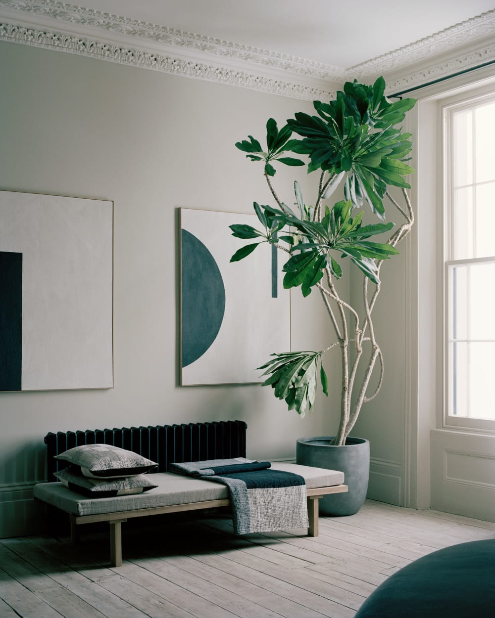 """Living room with low furniture and an oversized plant.<span class=""""sr-only""""> (opened in a new window/tab)</span>"""