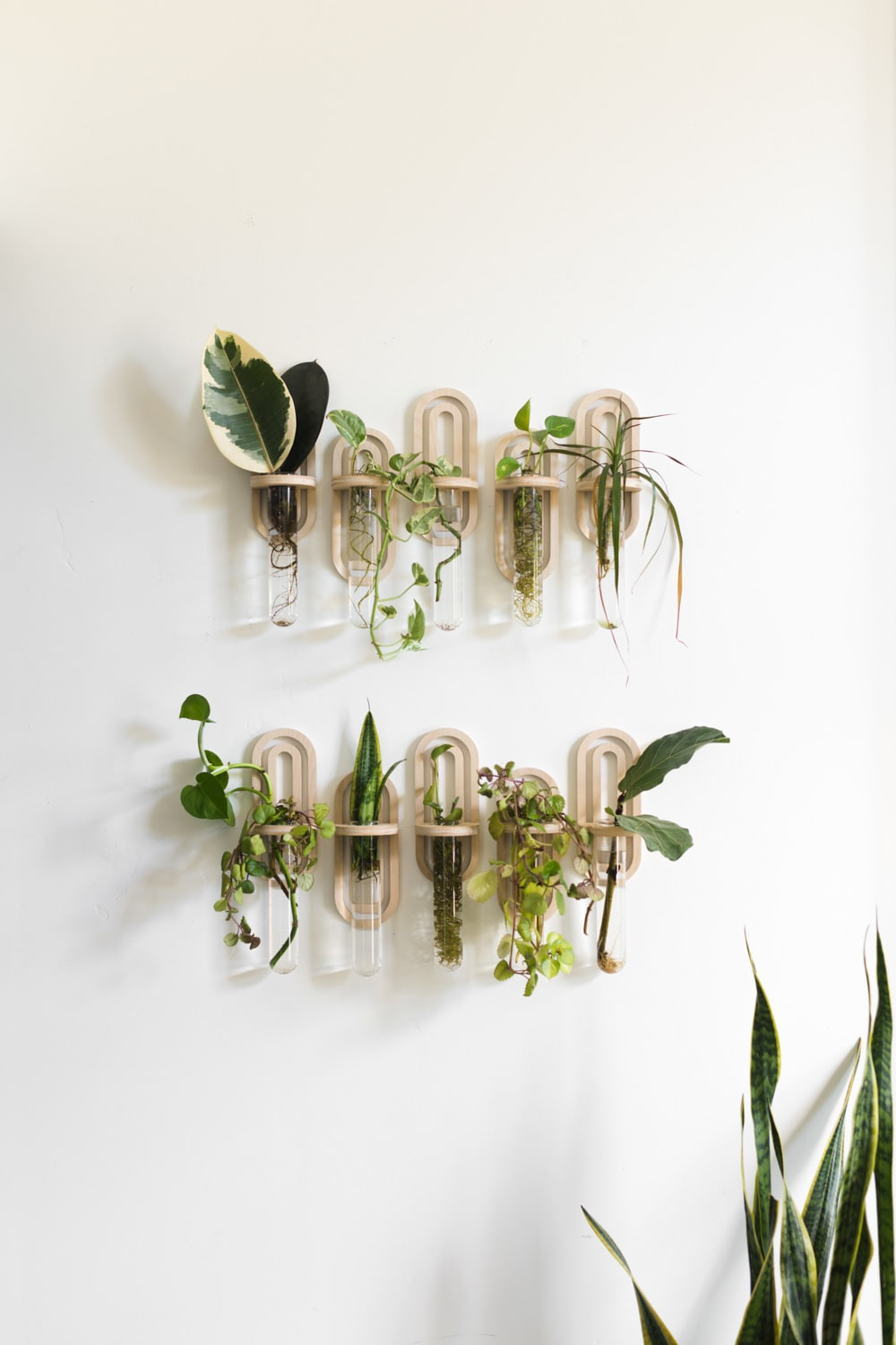 """Propagation wall: leaves in small tube vessels hanging on the wall.<span class=""""sr-only""""> (opened in a new window/tab)</span>"""