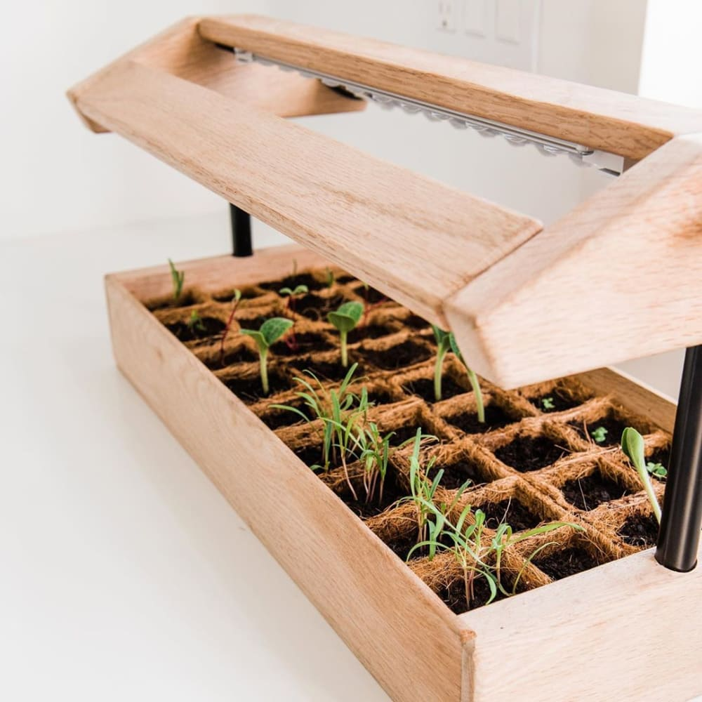 """Close-up view of the mini greenhouse, with small plants growing in it.<span class=""""sr-only""""> (opened in a new window/tab)</span>"""