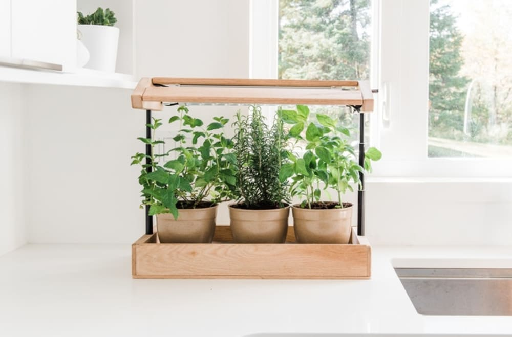 """Herb plants growing in a mini greenhouse on a kitchen counter.<span class=""""sr-only""""> (opened in a new window/tab)</span>"""