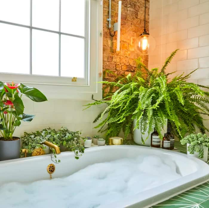 Boston sword fern on the side of a bathtub.