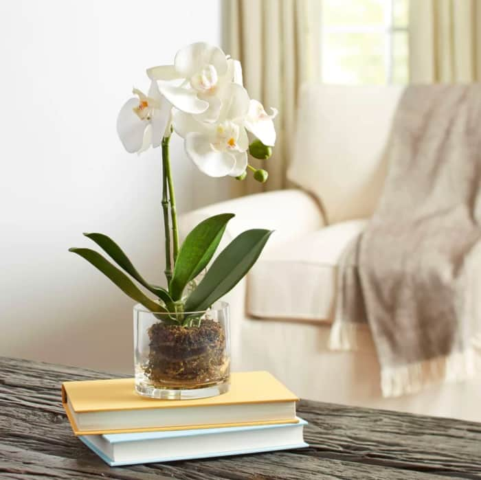 An orchid potted in a see-through vase.