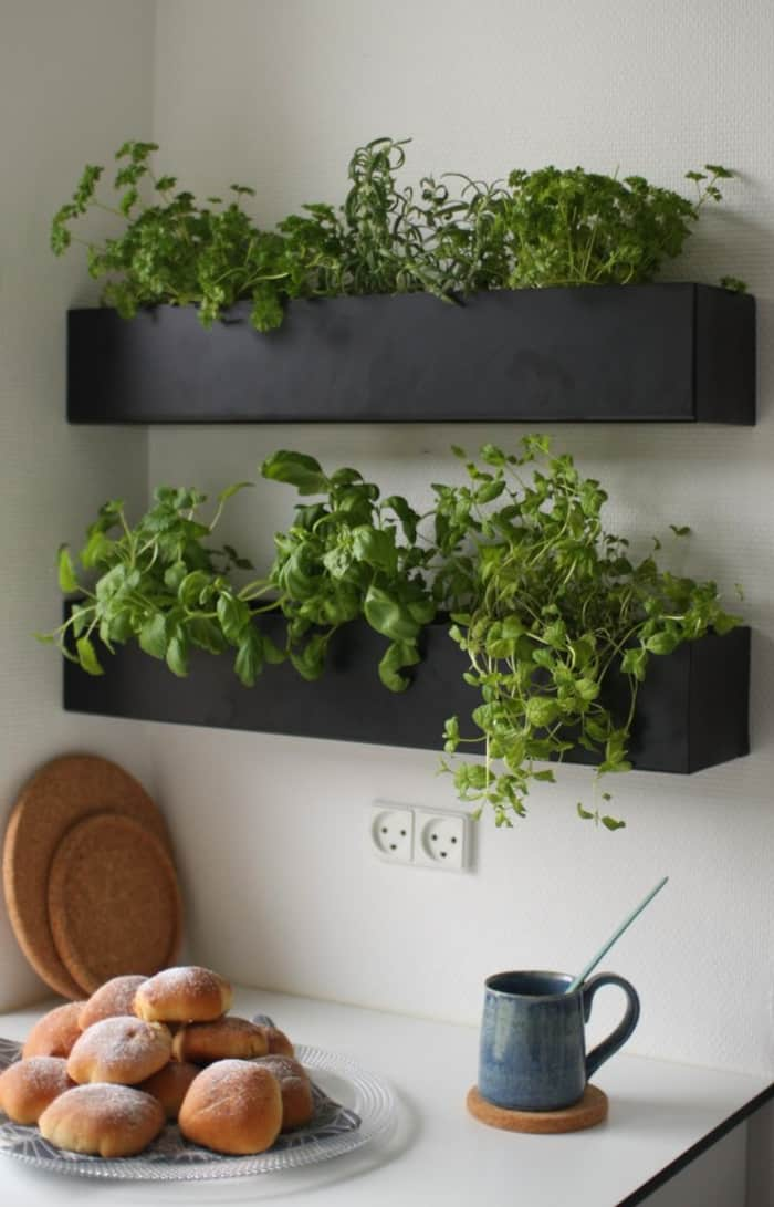 Hanging herb garden, great way to bring in a natural scent in a biophilic space.