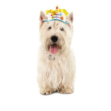 Petco Special Occasions Birthday Cake Dog Hat - Hinted
