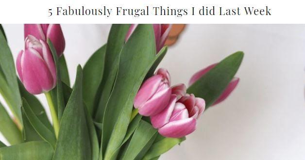 5 furgal things