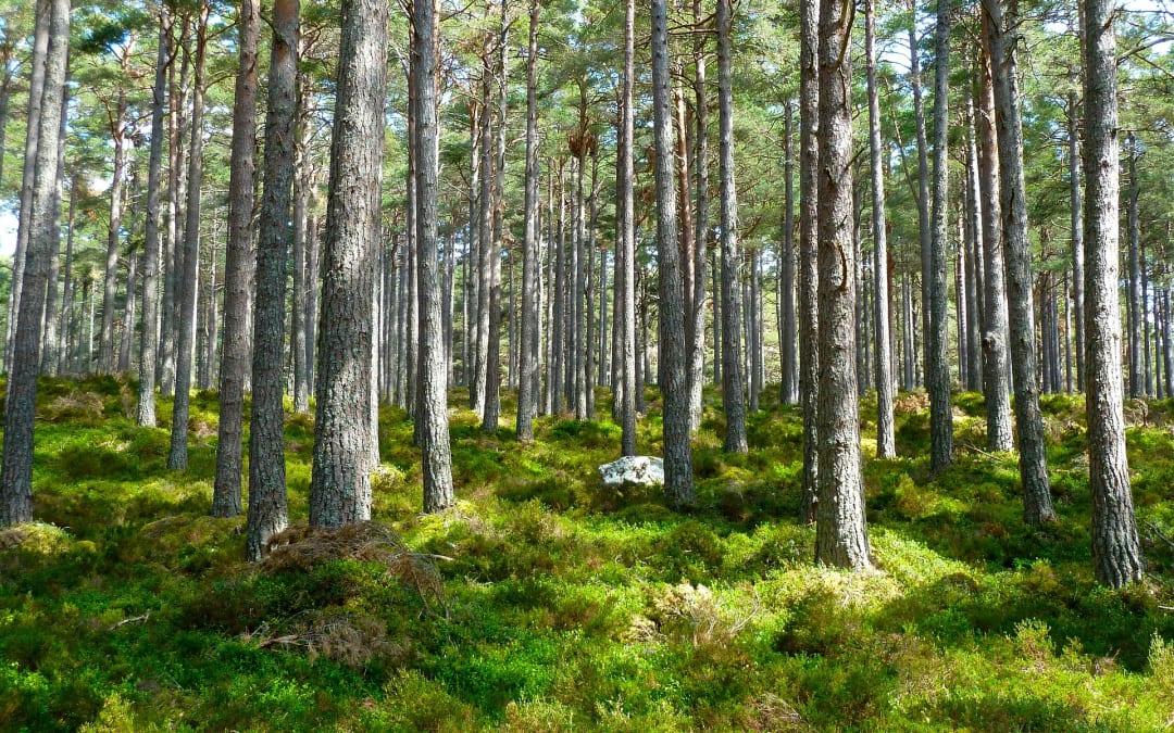 Auf dem Lehrpfad durch den Wald Klánovický les lernen Sie viel Interessantes und Wissenswertes über die Geschichte der Gemeinde und die hiesige Natur