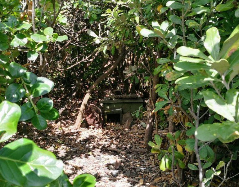 penguin nest box in the bushes