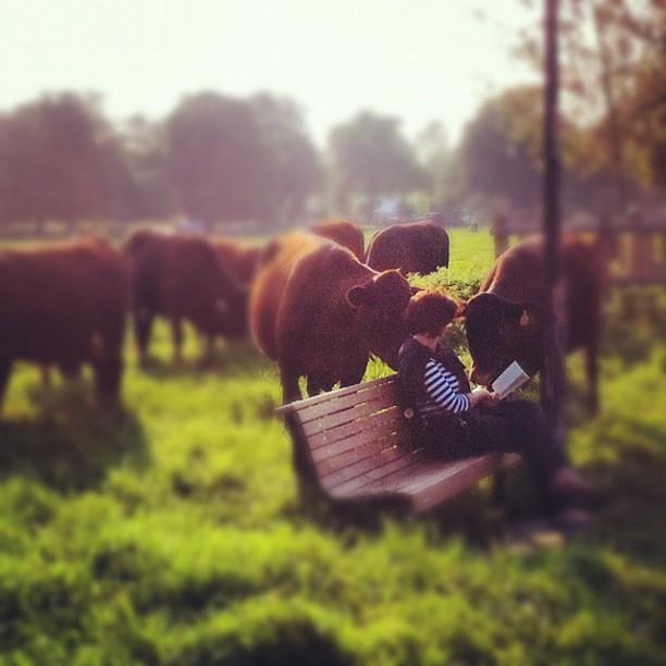 Reasons to visit Cambridge - Midsummer Common