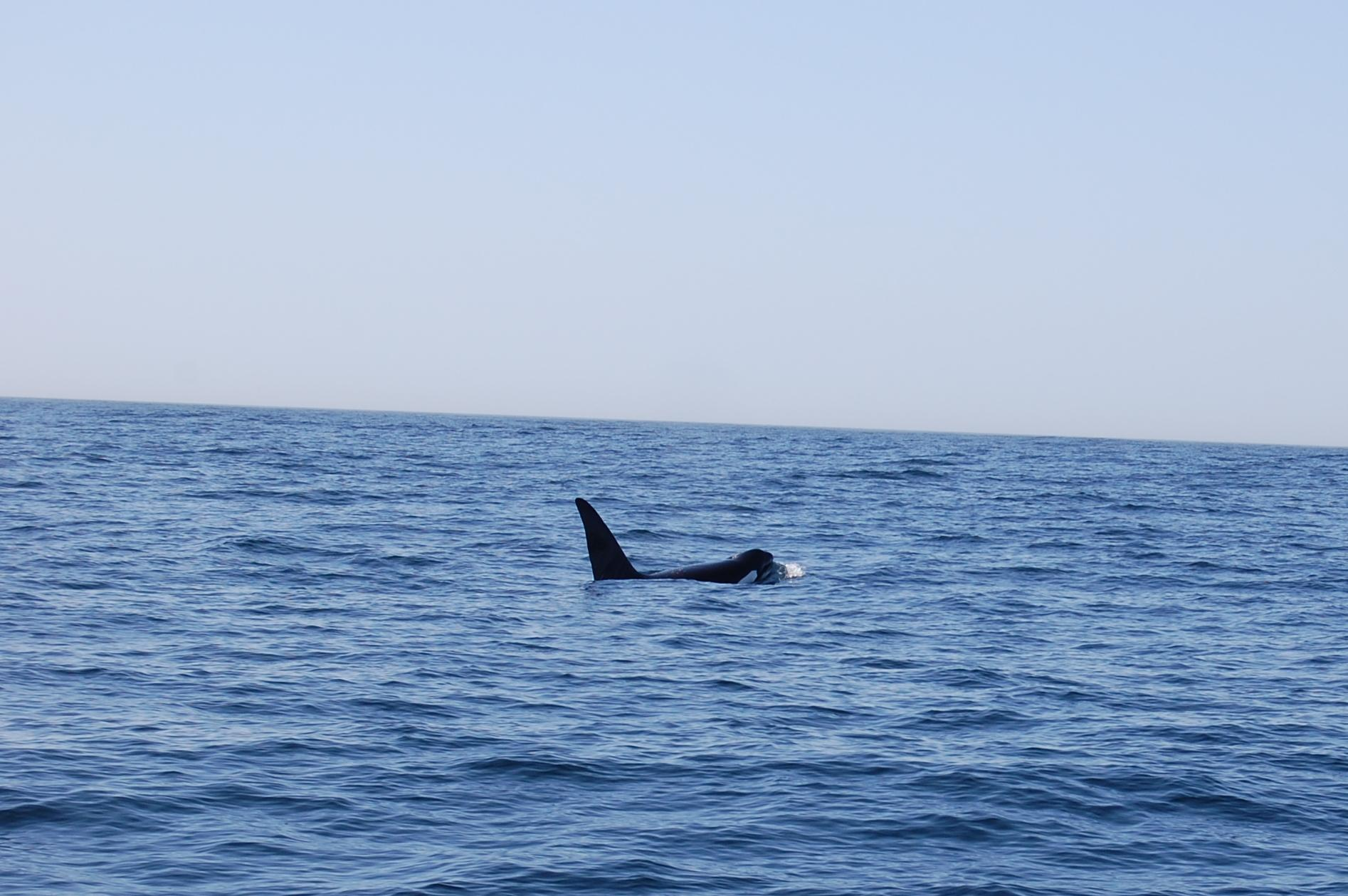 Reasons to visit Monterey - Monterey Bay Whale Watch