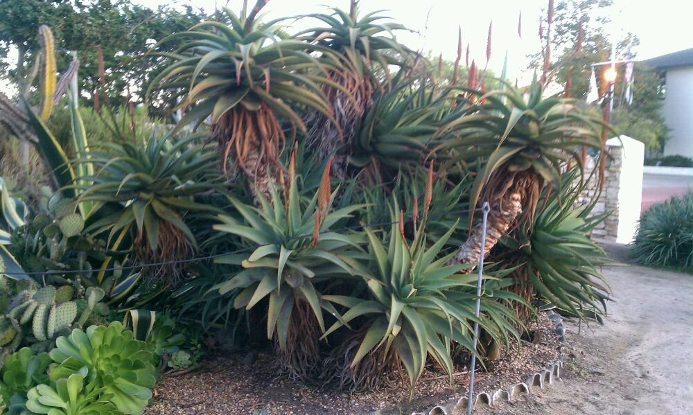 Reasons to visit Monterey - Custom House Plaza