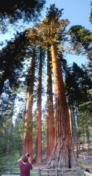 Reasons to visit Yosemite National Park - Mariposa Grove of Giant Sequoias