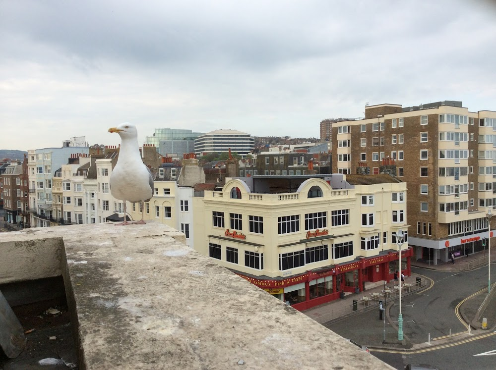 Reasons to stay in Brighton - Royal Albion Hotel