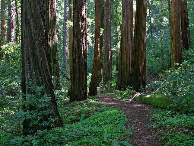 Reasons to Mountain Bike in the USA - Big Basin Redwoods State Park – Saratoga