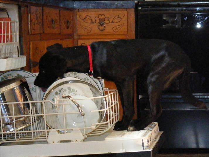 Reasons I don't have to do the dishes right now - The dishwasher is broken